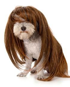 """Résultat de recherche d'images pour """"poils de chien"""""""